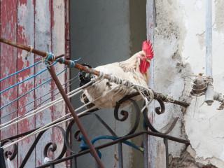 Havana, Cuba13