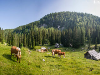 Planina pri Jezeru, Fuzinarske planine, Slovenia1