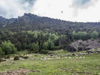 Prat de Platers, Parque Nacional de Aigüestortes, Spain2
