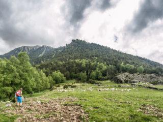 Prat de Platers, Parque Nacional de Aigüestortes, Spain3