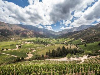 Viña Ventisquero, Valley Colchagua, Santa Cruz, Chile 1
