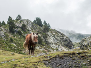 Camino Angonella, Andorra 11