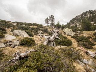 Estany de la Nou, Madriu, Andorra 4