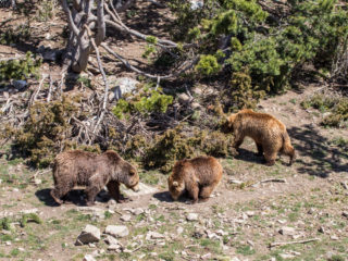 Naturlandia, Andorra 3