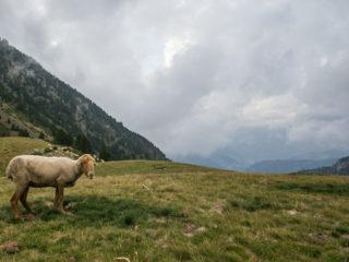 Refugio Prat Primer, Madriu, Andorra 3