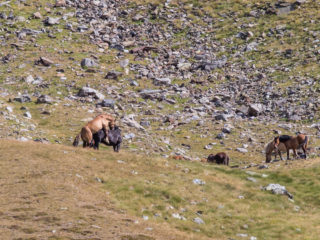 Vall de Ransol, Andorra 4